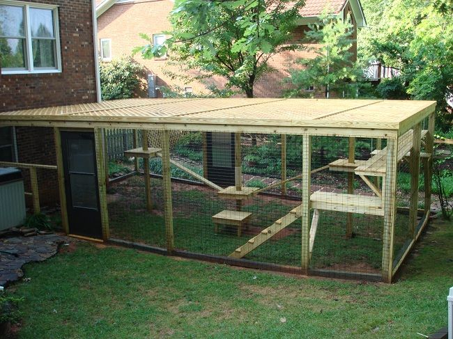 cat porch for outdoors | This custom cat enclosure has everything a cat would need for an ...