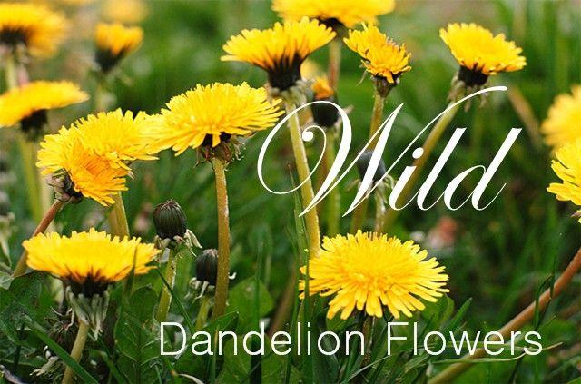 How to Make Detox Tea with Dandelion Flowers