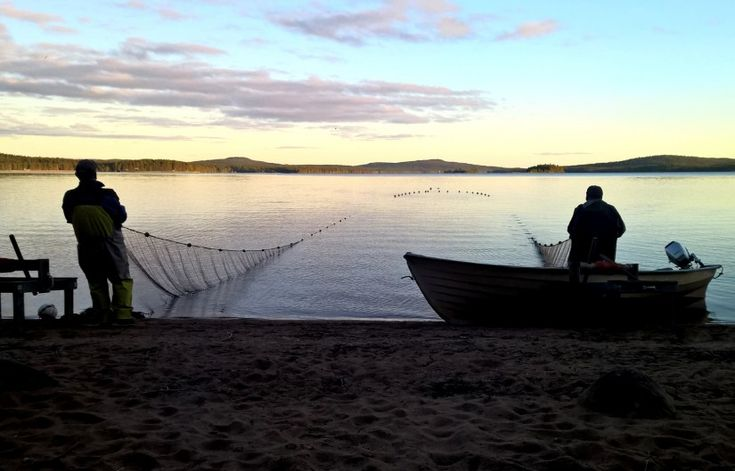 Fishermen seining for vendace with a net in Lake Miekojärvi in Pello in Finnish Lapland