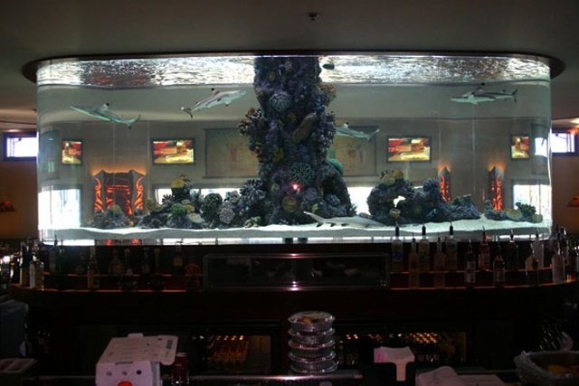 266 best fish tanks images on pinterest aquarium ideas for Atm fish tank