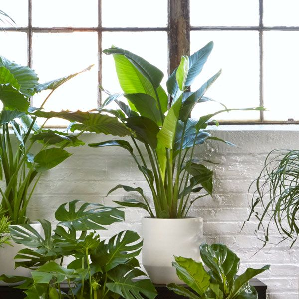 106 best house plants images on pinterest container for Low care garden plants