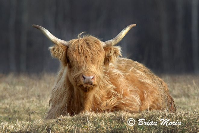 Six animals with better hair than you - The Weather Network