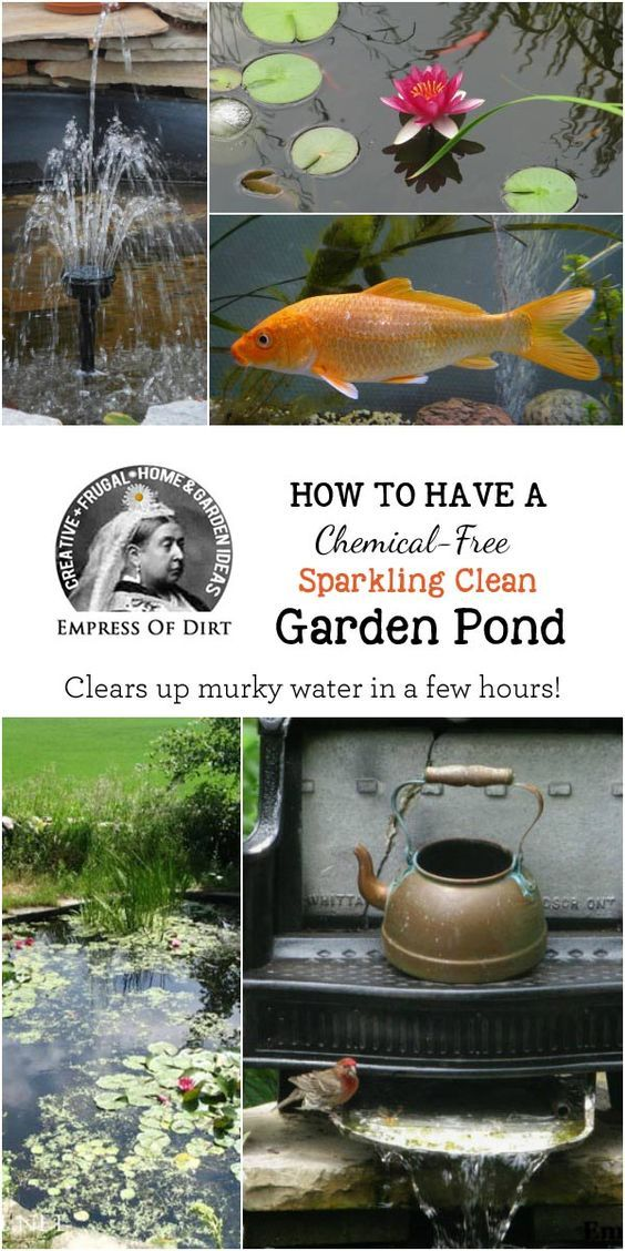 This simple trick is a chemical-free way to clear up murky water in small garden ponds within hours and keep it that way.