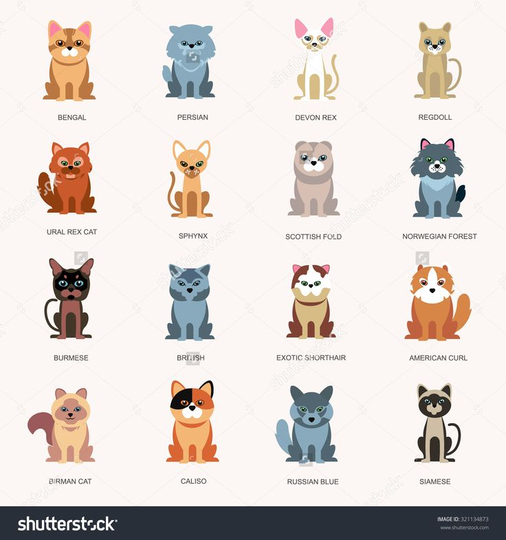 stock-vector-icons-cats-breed-cats-cats-in-a-flat-style-large-icons-breeds-of-cats-321134873.jpg (1500×1600)
