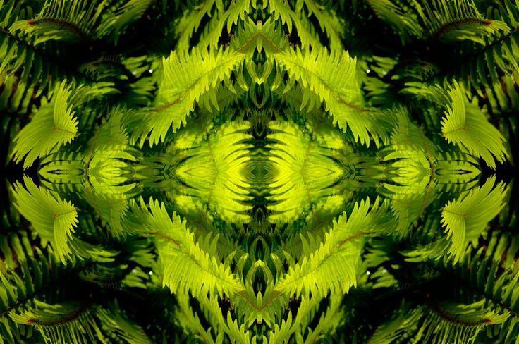 #thornappledreams #thornappleproductions #thornapple #mikeroutliffe #reflections #myth #neomythic #entheogenic #composite #compositephotography #psychedelicart #mirroring #speculativefiction #cyberpunk #futuristic #futurism #avantegarde #contemporaryart #digitalarts  #graphics #biomech #newmediaart #newmediaartists #cyberbetics #artaesthetics #concept #multimedia #transmedia #Ps_InMotion