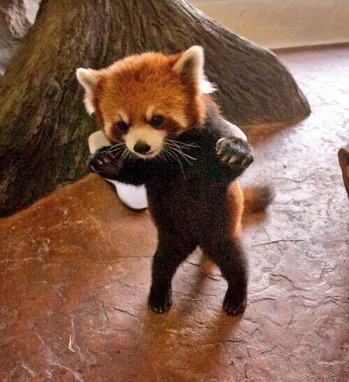 Dancing Babies Cute: 63 Best DANCING ANIMALS Images On Pinterest