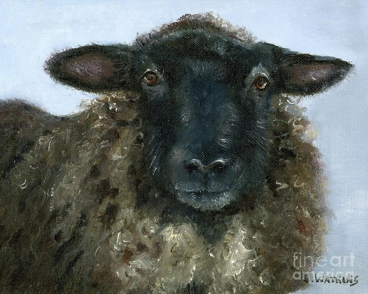 Baa Baa Black Sheep Fine Art Print by Vicky Watkins