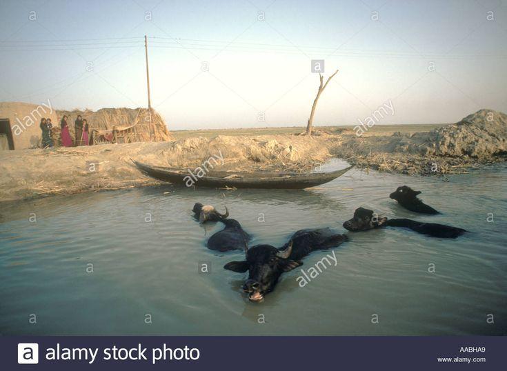 The Marsh Arabs free