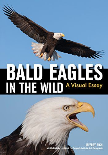 Available 2018! Bald Eagles In The Wild: A Visual Essay of America's National Bird