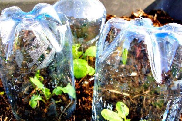 Bottle-Greenhouse-1