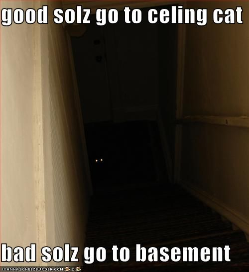 Basement Cat  #cats #meme