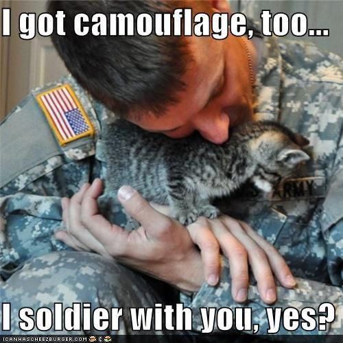 AmericanKitty Cat, Camo, Soldiers, Funny Pictures, Veterans Day, Kittens, Yarns Wreaths, Military, Animal