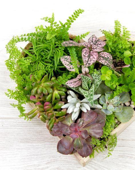 17 meilleures id es propos de arrangements de plantes. Black Bedroom Furniture Sets. Home Design Ideas
