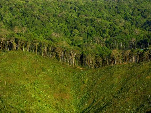 Deforestation Facts, Deforestation Information, Effects of Deforestation - National Geographic