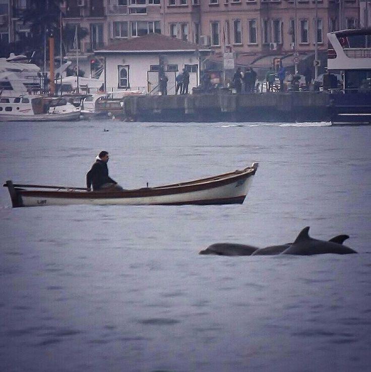 Dolphins Istanbul Arnavutkoy