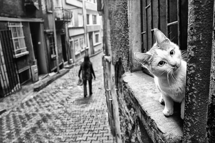 Sweet kitty in Istanbul >>> Cats are everywhere in Istanbul!!