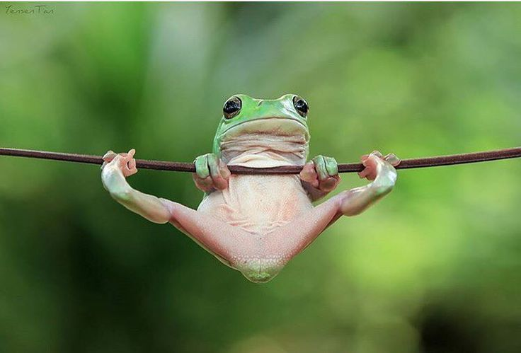 cute frog trying to be me