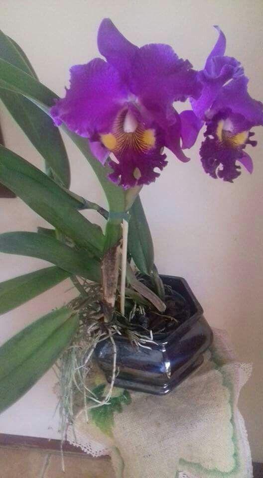 Ideas about orchid arrangements on pinterest