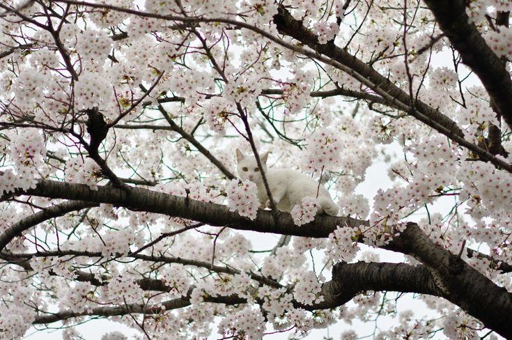 Крутые фотографии итонкий аромат цветущей вишни.