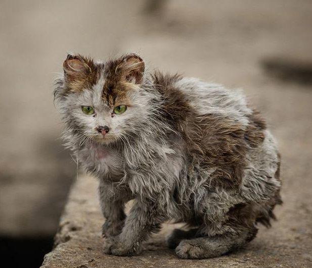 Вы хоть раз накормили кошку, что под окнами в вашем дворе?