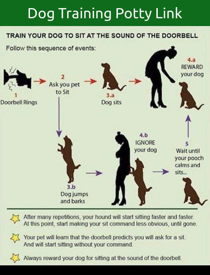 Dog barking ringtone   iphone ringtone   animal ringtones.