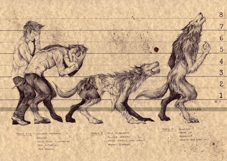 The Werewolf - Transformation Sequence by Zellgarm