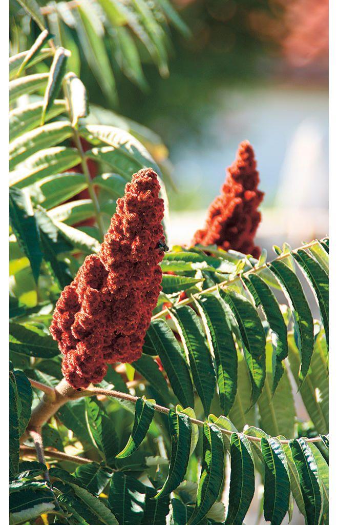 Die besten 25 schnell wachsende pflanzen ideen auf for Schnellwachsende pflanzen