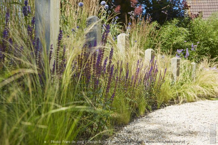 36 best images about portfolio voortuin in strandsfeer on for Small ornamental grasses for borders