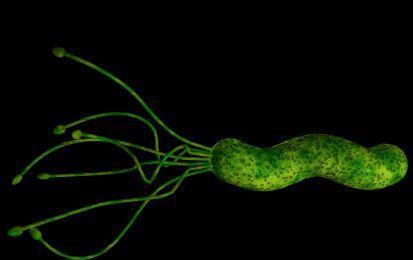 Helicobacter: la dieta consigliata da seguire - L'helicobacter pylori è un batterio che può causare ulcera gastroduodenale o gastrite. I principali sintomi di queste due patologie sono caratterizzati dal bruciore di stomaco, dolore addominale e reflusso gastroesofageo. Se si soffre di questo disturbi si deve prediligere una dieta ricca di verdura, frutta, carne e pesce magri, cotti con metodi di cottura leggeri.