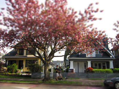 Ein Zierkirschbaum pro Tag 9