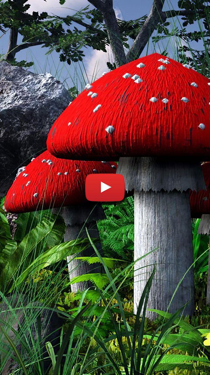 24++ Redcap mushroom information