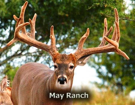 Texas Hunting Guides, Texas Hunting Outfitters, Texas Hunts - Combo hunts on a huge variety of big game!