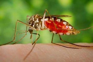 Rimedi naturali alle punture d'insetti