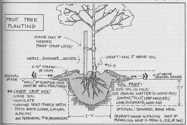 Nice Article On Care For Bare Root Fruit Trees
