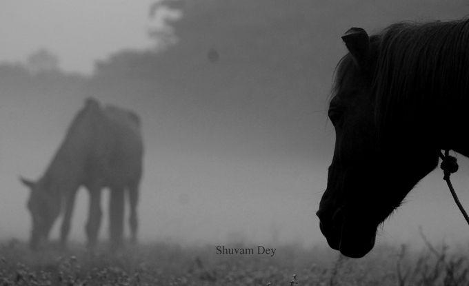 """_MG_6040"" by shuvamdey! Find more inspiring images at ViewBug - the world's most rewarding photo community. http://www.viewbug.com/photo/63893643"