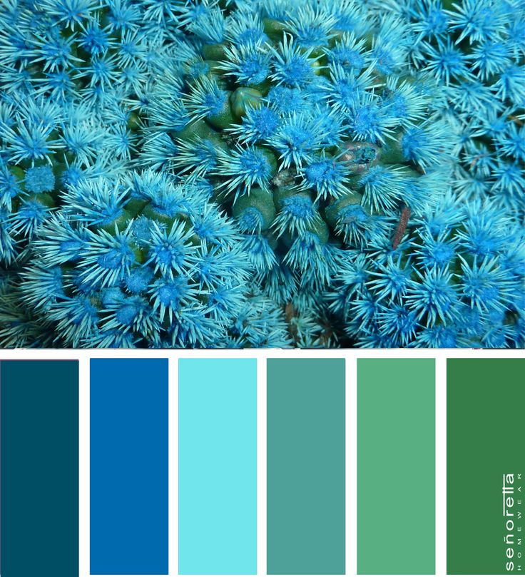 Blue💙 cactus🌵 inspired color palette