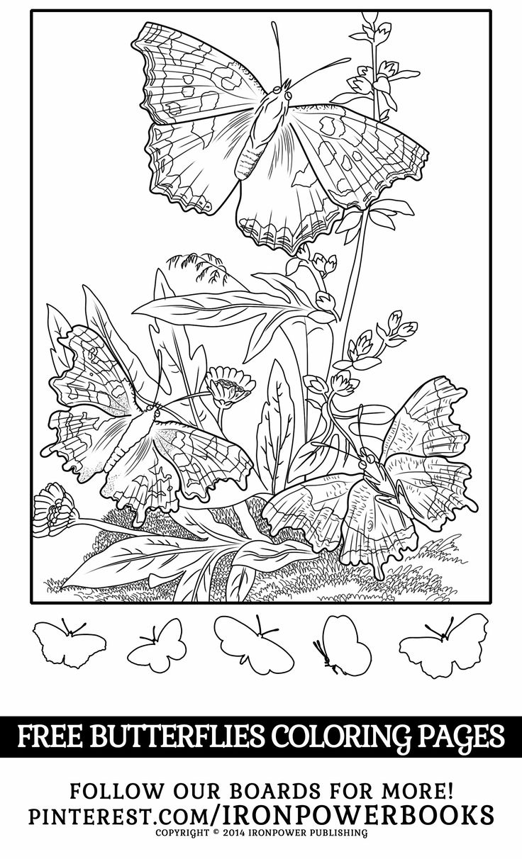 Detailed butterfly coloring pages - Free Butterfly Coloring Sheet Detailed Coloring Pages For Adults Better Use Pointed Coloring Materials