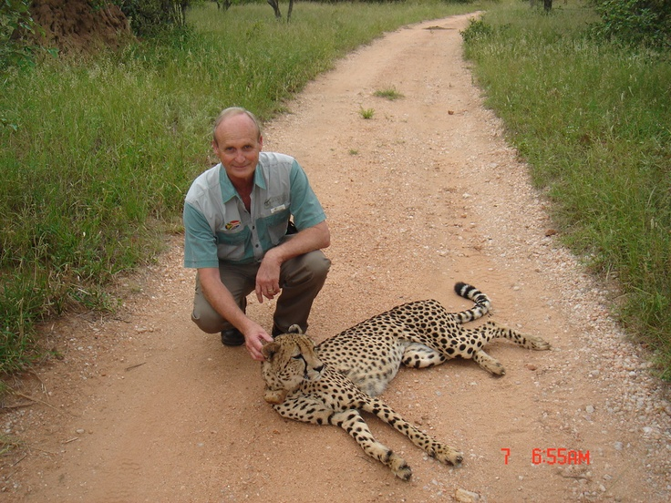 There is nothing like an early morning walk on a Big Five game farm with a Cheetah.