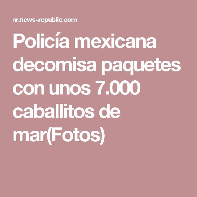 Policía mexicana decomisa paquetes con unos 7.000 caballitos de mar(Fotos)