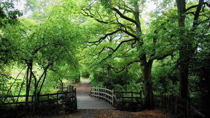 Poohsticks Bridge, Ashdown Forest, UK. An enchanted (and real) place: Winnie-the-Pooh's woods - Chicago Tribune