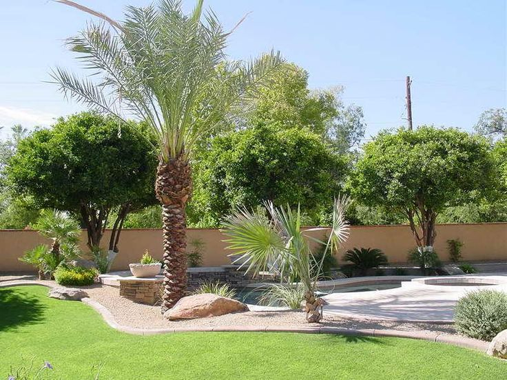 Small Backyard Landscape Ideas On A Budget best 25+ landscaping with palm trees ideas on pinterest | palm