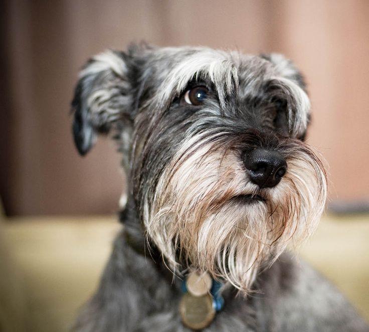 8 fakta om hundars hälsa