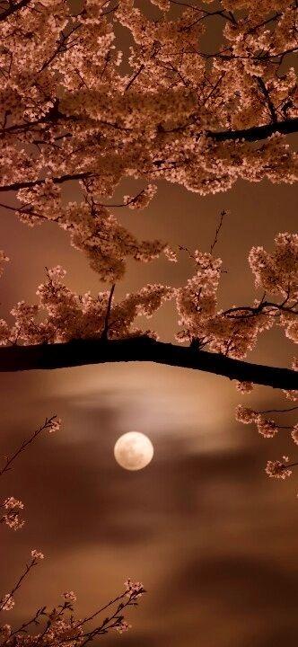 Full Moon rise over Japan.