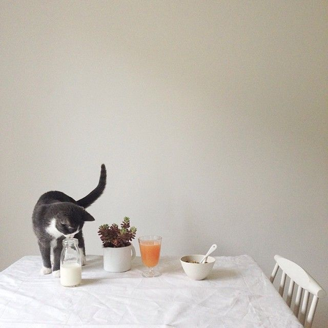 Cat & Granola | @▲ my little fabric