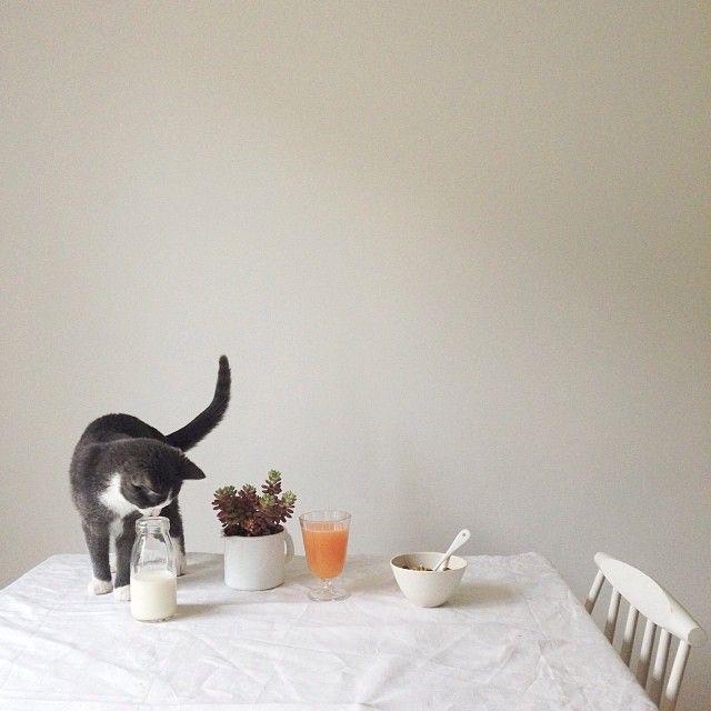 Cat & Granola