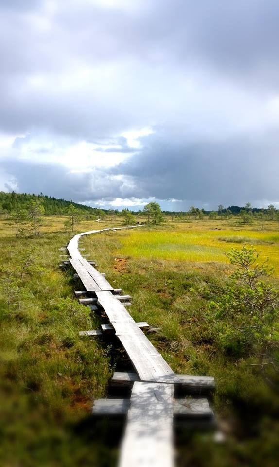 August, Torronsuo National Park, Finland - Torronsuo elokuussa
