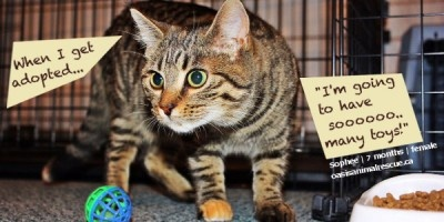 7 month old Sophee. Hoping to be adopted soon!  oasisanimalrescue.ca