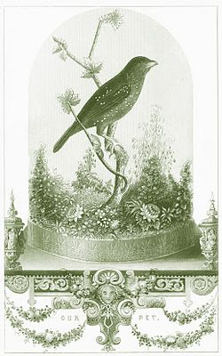 more free printables, all vintage and nature themed.