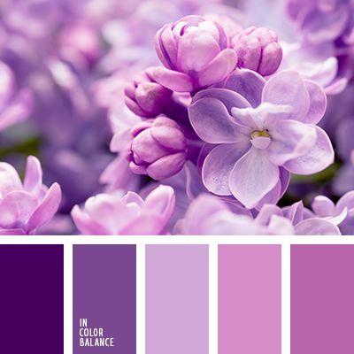 Нежно-фиолетовый цвет