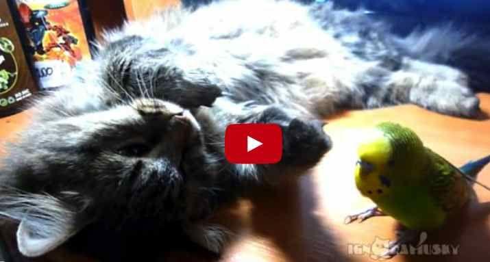 Bird hassles cat
